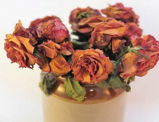 Best Dried Flowers Singapore