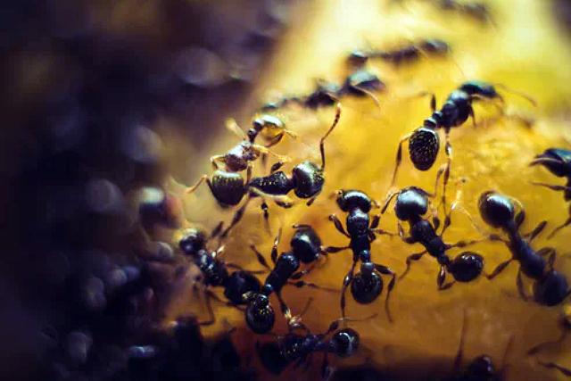 Best Ants Control Services Singapore