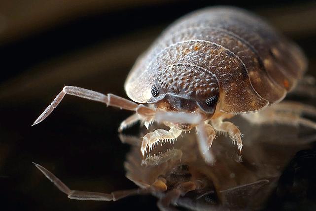Best Bed Bug Pest Control Singapore